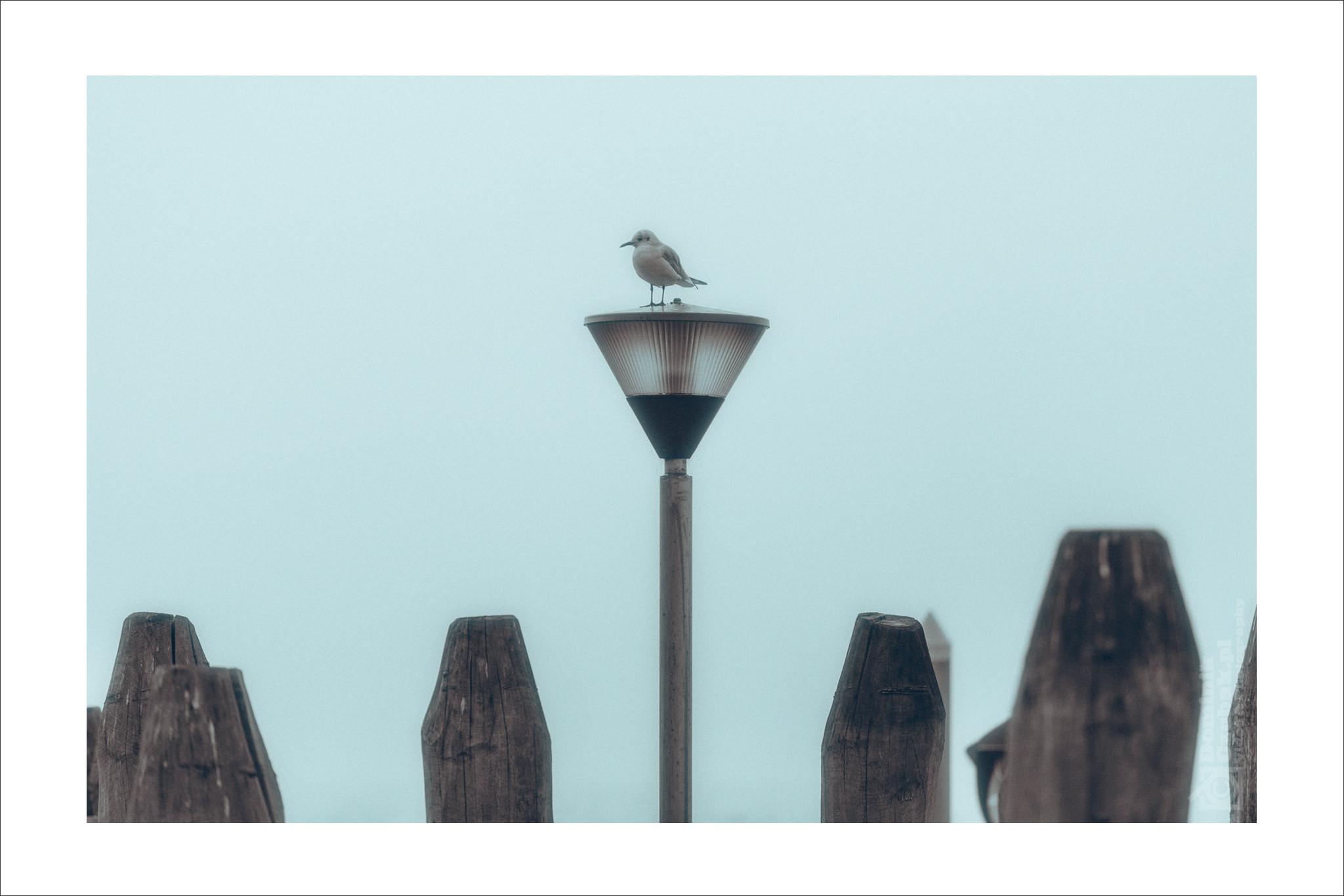 fotograf-slubny-sesja-w-wenecja-007